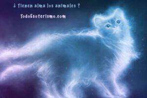 alma animales