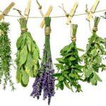 curación con plantas