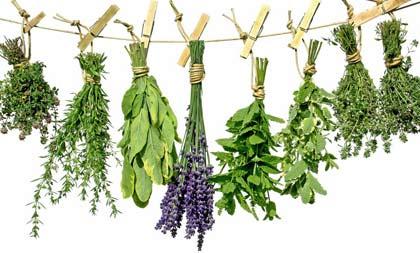 La curación a través de plantas. Medicina Natural