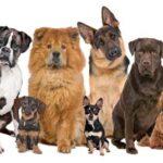 perros razas signo zodiaco