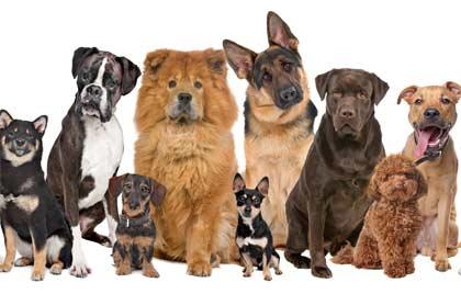 La raza de perro ideal para cada signo zodiacal