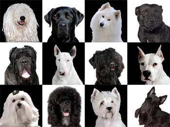 perros y signos