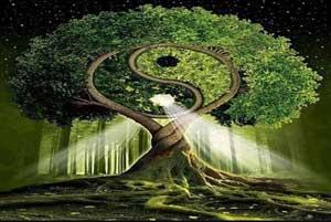 principios del camino del Tao