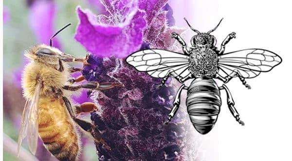 Simbología de las abejas