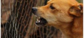 Significado de soñar que te atacan perros