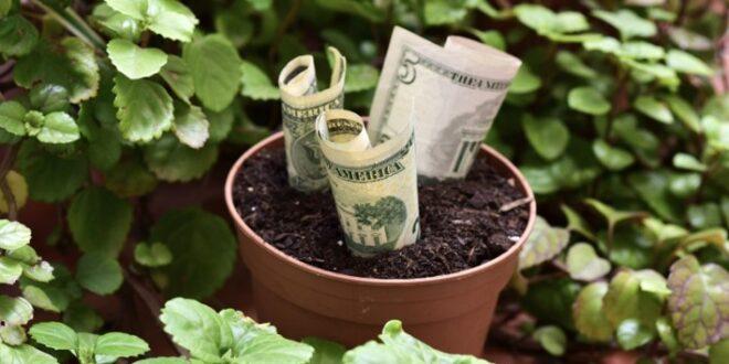 Estas son las plantas que atraen la buena suerte