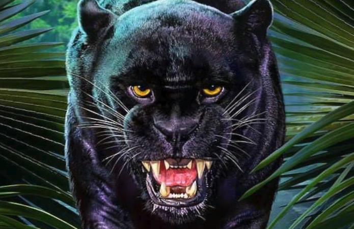 Exu Pantera Negra de frente